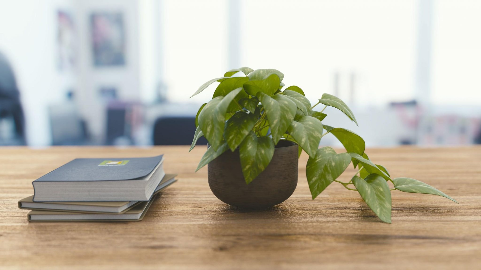plant on desk - office productivity